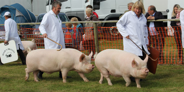 Image result for Anglesey County Show